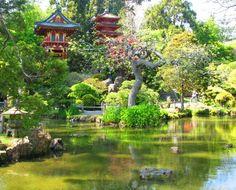 Tea Garden in Japan