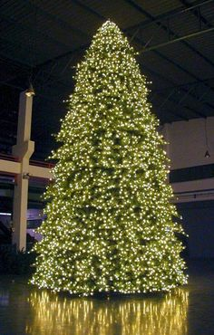Amazing! #Christmas #lights #tree #huge