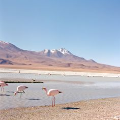 The flamingos along the laguna Colorada and the laguna Hedionda are pretty in pink. Les flamants qui arpentent les eaux de la laguna Colorada et de laguna Hedionda voient la vie en rose. Photo by / de Kari Medig.See more from the enRoute archives. Consultez les archives d'enRoute.