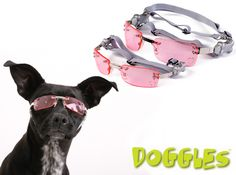 Fashion Forward Doggles K9 Optix Protective Sunglasses for Dogs (available in 3 colors). On Sale Today w/ Free Shipping @ www.Coupaw.com