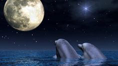Dolphins in the Moon