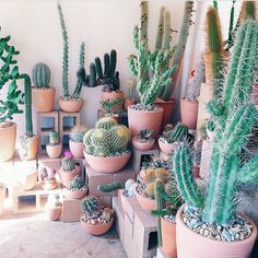 One that can inspire people when traveling to the mountains is the fantasy of making cactus or other mountainous plants in the form of miniature parks. Cactus plants can be an alternative to be use… Diy Garden, Garden Plants, Indoor Plants, Indoor Cactus, Indoor Gardening, Air Plants, Cacti And Succulents, Planting Succulents, Planting Flowers