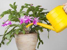 Orchideen Erfolgreich Umtopfen Einige Regeln Die Man Beim Umpflanzen Beachten Muss