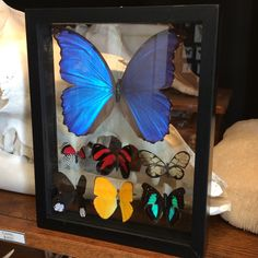 """Double Glass Mounted Butterfly Collection 7.5"""" x 8.5"""""""