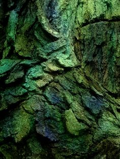 Tree Bark  dragon scales
