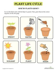 How Plants Grow | Lesson Plan | Education.com