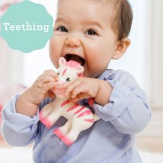 This whimsical pink-striped zebra teether is made from natural rubber. The soft and flexible teether is easy to hold and fun to chew. Babies love to gum on her bendy legs, colorful mane and nubby tail. Plus, give her a squeeze to enjoy a delightfully squeaky sound! Natural Rubber, Teething, Baby Love, Whimsical, Colorful, Babies, Legs, Children, Pink