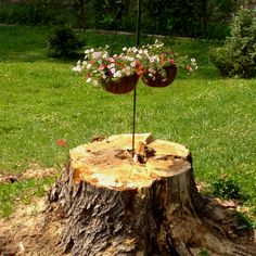 Old tree stump made into a flower planter.  We eventually planted creeping phlox in the middle of the stump.