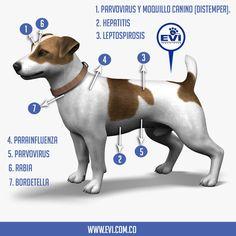 #Vacunas básicas para la protección de tu peludito.