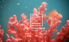 """Pantone have announced their 2019 colour of the year and it's a vibrant Living Coral! Pantone describes Living Coral as """"an animating and life-affirming coral hue with a golden undertone that energizes and enlivens with a softer edge. Color Trends, Design Trends, Web Design, Graphic Design, Design Ideas, Brand Design, Modern Design, Yoga Studio Design, Coral Pantone"""
