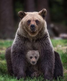 Mumma bear and bear cub