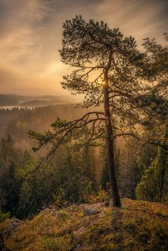 ~~Standing on the Edge | Beautiful foggy sunrise at Aulanko nature reserve, Hämeenlinna, Finland | by Lauri Lohi~~