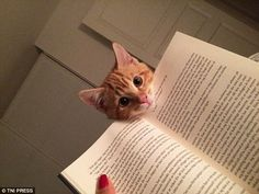 Are you enjoying it? This inquisitive cat is particularly nosy when it comes to his owner's reading habits