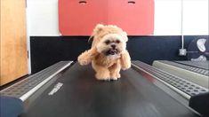Perro disfrazado de oso la nueva sensación de Internet | Voxpopulix.com