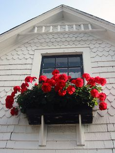 Red geraniums in pots by the doors and in window boxes (a book on garden witchcraft suggested it). Plus, geranium red's my favorite color. Love Flowers, Beautiful Flowers, Flower Window, Red Geraniums, Red Cottage, Garden Windows, Window Boxes, Flower Boxes, Container Gardening