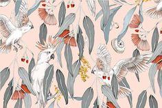 Australian Native Flowers, Australian Animals, Australian Art, Botanical Drawings, Watercolor Print, Diy Art, Art Inspo, Flower Art, Prints