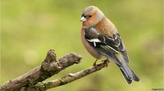The battle for nesting sites among the birds and the bees