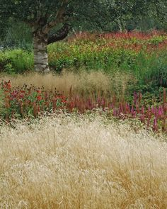 incorporating existing trees Millennium Garden at Pensthorpe Wildfowl Reserve, Norfolk, UK. - 15th September, 2008