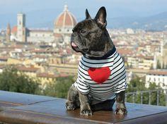 VALENTINO T-Shirt for dog french bulldog - frenchie on Etsy, $40.15