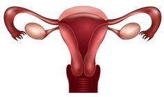 Hormone Foundation Releases Patient Fact Sheet On Endometriosis