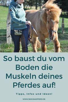 Horse Riding Tips, Natural Horsemanship, Hobby Horse, Horse Stalls, Napoleon, Equestrian, Exercise, Horses, Animals