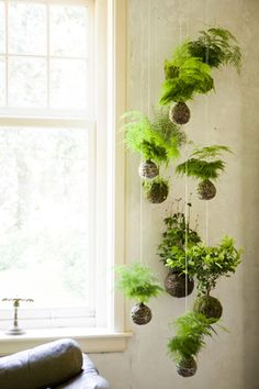 Looks like a Tillandisa mobile.  :)   Possible plant arrangement for living room wall.  Could mount square planter boxes with draping succulents to wall, if hanging is a problem (due to wind).