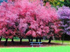 Pink and purple is beautiful in Tervueren park - Tervueren, Vlaams Brabant, Belgium;  photo by jackfre2, via Flickr