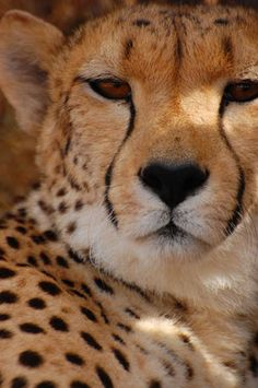 Gallery   Ibamba Private Game Reserve   Luxury Game Lodges   Eastern Cape   South Africa Animals Planet, Game Lodge, Private Games, Game Reserve, African Safari, Lodges, Joyful, South Africa, Wildlife