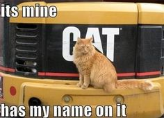"See what this funny ‪‎cat‬ is saying, ""It's mine because my name is written there"" #thatsmyname #minee #backoff"