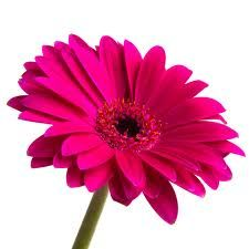 flower images - Google Search