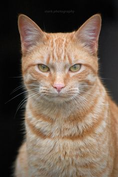 """""""Never try to out-stubborn a cat."""" --Lazarus Long"""