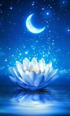 Lotus Azul, Wallpaper Nature Flowers, Lotus Flower Wallpaper, New Moon Rituals, 5d Diamond Painting, Pretty Wallpapers, Wallpaper Backgrounds, Iphone Wallpapers, Beautiful Flowers