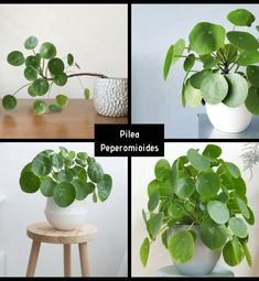 Patio Interior, Plantar, House, Gardening, Amor, Home, Diner Decor, Shade Plants, Congas