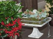 Ardisia nahradí vánoční stromek. Nezabere místo a nemusíte řešit jehličí Plants, Plant, Planets