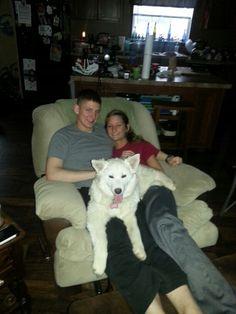 Ice Fox (hybrid Canadian Eskimo/wolf) perfect lap dog ;-) Husky Hybrid, Canadian Eskimo, Lap Dogs, Foxes, Wolf, Ice, Animals, Animales, Animaux