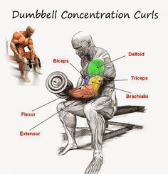 The Fitness Era: Dumbbell Concentration Curl