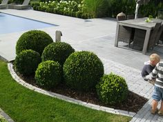 Small grouping of clouds Boxwood Landscaping, Boxwood Garden, Front Yard Landscaping, Front Gardens, Formal Gardens, Outdoor Gardens, Garden Borders, Garden Paths, Front Garden Landscape