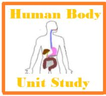 Teach 13 systems of the human body and have fun with projects, demonstrations, and experiments.