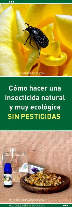 Cómo hacer una insecticida natural y muy ecológica. ¡Sin pesticidas!