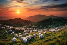 """La Chaîne des Puys, France - """"Sheep and Volcanoes"""" by Florent Courty"""