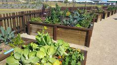 Beautifully designed raised garden beds in a community garden