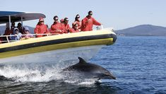 Bruny Island Cruises provides award-winning wilderness cruises in Robert Pennicott's yellow boats. Day tours to Bruny Island available from Hobart, Tasmania. Bruny Island, Island Cruises, Welcome Aboard, Tasmania, Day Tours, Wilderness, Things To Do, Places To Visit, Boat