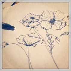 A pen and ink drawing I did of some poppies