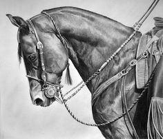 """""""Smokey"""" 13 x 14 graphite on bristol. Available for purchase at Southwest Roundup Gallery, San Juan Bautista, CA mariadangeloart@aol.com"""