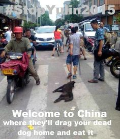Welcome to China – the world's largest fur exporter – which has left animal activists sickened.