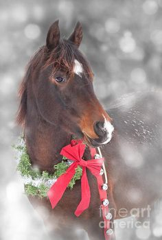 Merry Christmas!  As the year dies in winter's chill, it is time to begin...A  Happy New Year! JL. Cowboy Christmas, Noel Christmas, Winter Christmas, Christmas Animals, Country Christmas, Christmas Pets, Christmas Horses, Christmas Lights, Merry Little Christmas