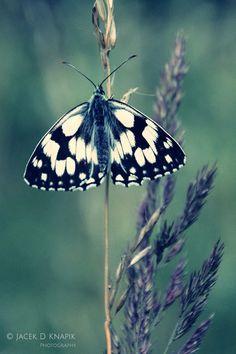 #butterfly ~ETS
