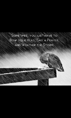 """""""Sometimes, you just have to bow your head, say a prayer, and weather the storm"""" / Have Faith / quotes to inspire and heal Great Quotes, Me Quotes, Inspirational Quotes, Faith Quotes, Clever Quotes, Perseverance Quotes, Gospel Quotes, Bird Quotes, Courage Quotes"""