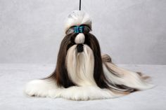 Looker the Shih Tzu / A New York Times photographer, set up a studio at the Westminster Kennel Club dog show and invited Best of Breed winners to pose. (Photo: Fred R. Conrad/The New York Times)
