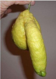 """Its so funny when you find fruits/veggies that look like """"things"""". Funny Illusions, Very Demotivational, Funny Fruit, Funny Food, Weird Fruit, Weird Food, Funny As Hell, Funny Sexy, Food Humor"""